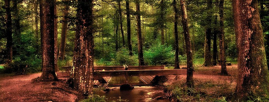 Erdő, kirándulás